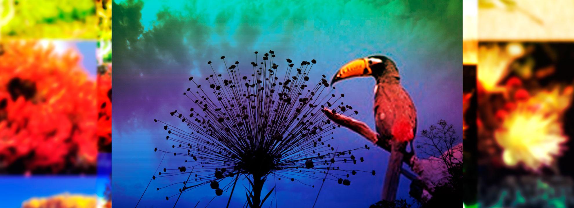 Fauna e Flora do Cerrado